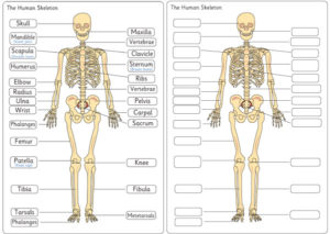 Anatomy Resources