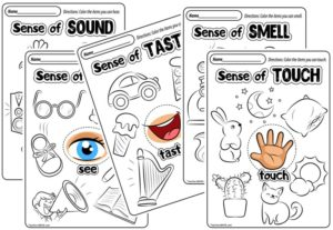 Freebie Friday ~ 5 Senses Resources
