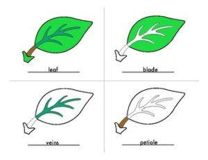 Botany Resources